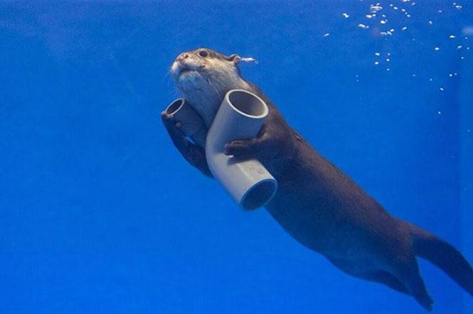 Ίσως ο πιο χαριτωμένος υδραυλικός στον κόσμο | Φωτογραφία της ημέρας