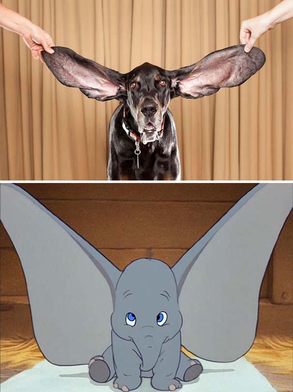 Σκύλοι που μοιάζουν με κάτι άλλο (2)