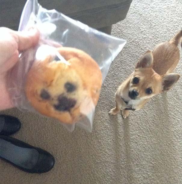 Σκύλοι που μοιάζουν με κάτι άλλο (6)