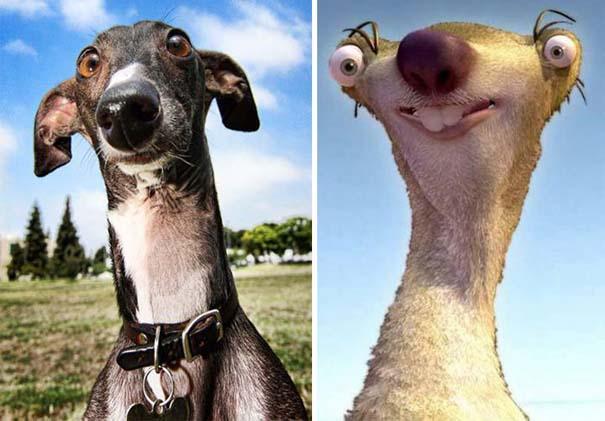 Σκύλοι που μοιάζουν με κάτι άλλο (3)