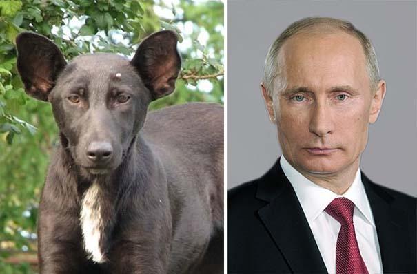 Σκύλοι που μοιάζουν με κάτι άλλο (4)