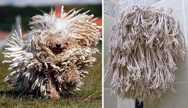 Σκύλοι που μοιάζουν με κάτι άλλο (19)