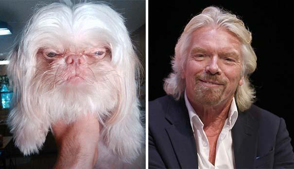 Σκύλοι που μοιάζουν με κάτι άλλο (7)
