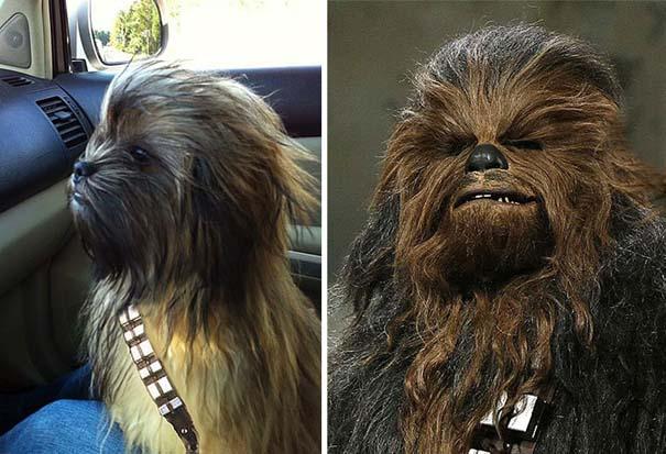 Σκύλοι που μοιάζουν με κάτι άλλο (1)