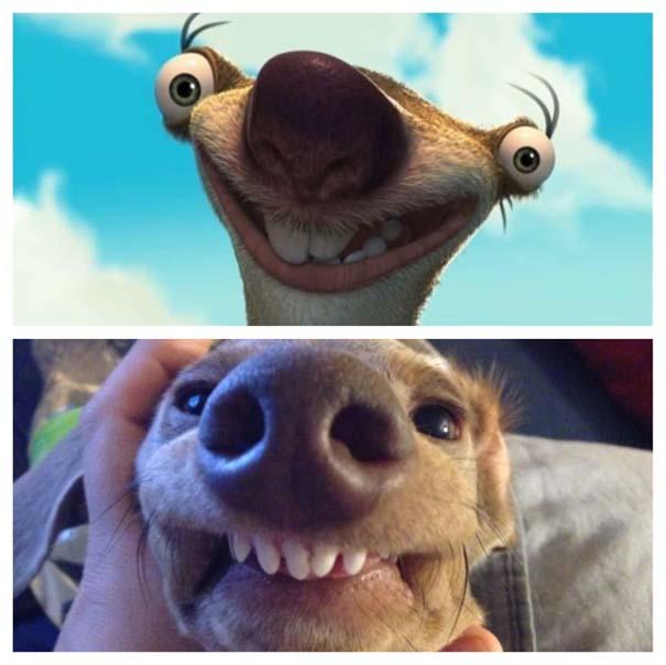 Σκύλοι που μοιάζουν με κάτι άλλο (18)