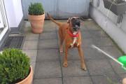 Σκύλος τρελαίνεται με νεροπίστολο