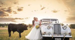 Ταύρος κάνει photobombing σε γαμήλια φωτογράφηση