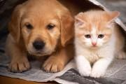 Τρικ που όλοι οι ιδιοκτήτες σκύλου ή γάτας πρέπει να ξέρουν