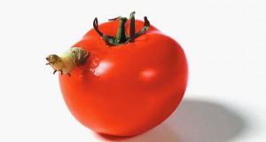 Η τροφική αλυσίδα σε μια «άγρια» φωτογράφηση