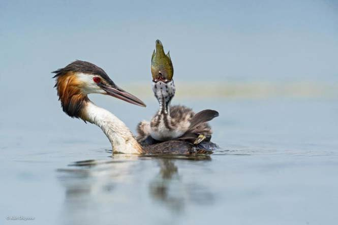 Wildlife Photographer Of The Year 2014 (1)