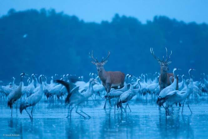 Wildlife Photographer Of The Year 2014 (2)