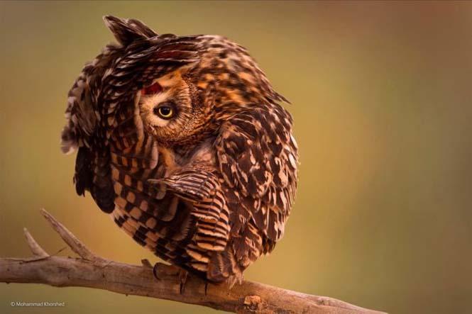 Wildlife Photographer Of The Year 2014 (4)