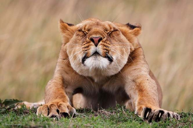 Wildlife Photographer Of The Year 2014 (5)