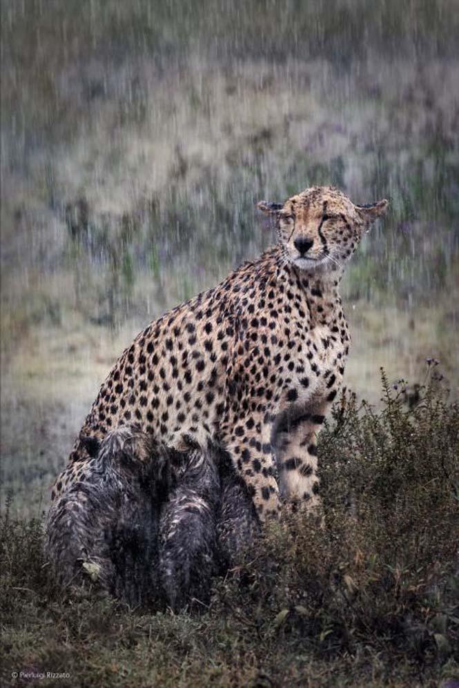 Wildlife Photographer Of The Year 2014 (6)