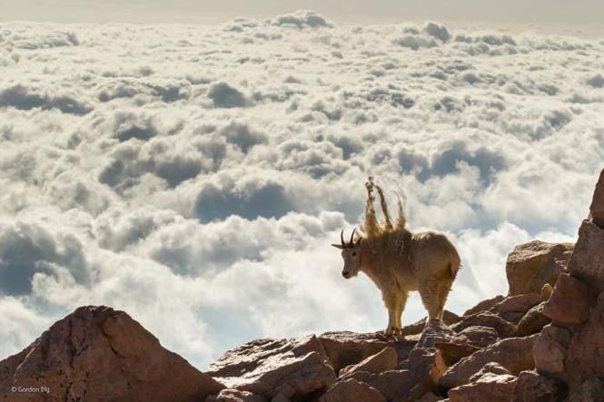 Wildlife Photographer Of The Year 2014 (10)