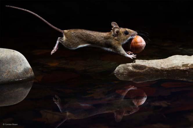 Wildlife Photographer Of The Year 2014 (11)
