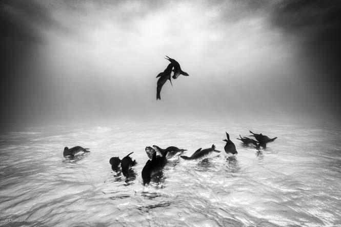 Wildlife Photographer Of The Year 2014 (14)