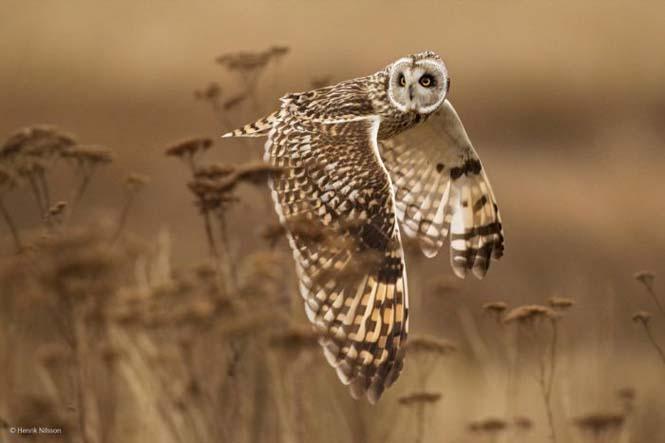 Wildlife Photographer Of The Year 2014 (16)