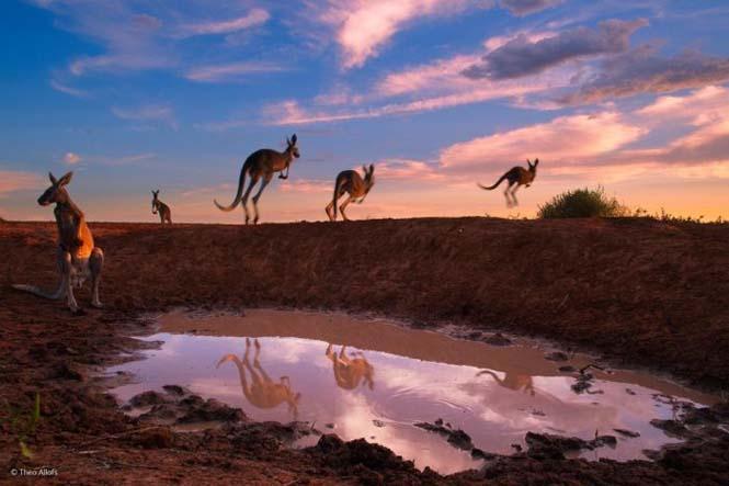 Wildlife Photographer Of The Year 2014 (17)