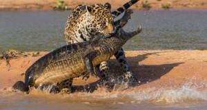 30 από τις καλύτερες φωτογραφίες του διαγωνισμού Wildlife Photographer Of The Year 2014