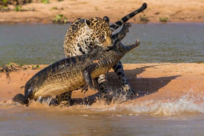Wildlife Photographer Of The Year 2014 (19)