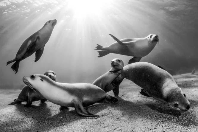 Wildlife Photographer Of The Year 2014 (22)