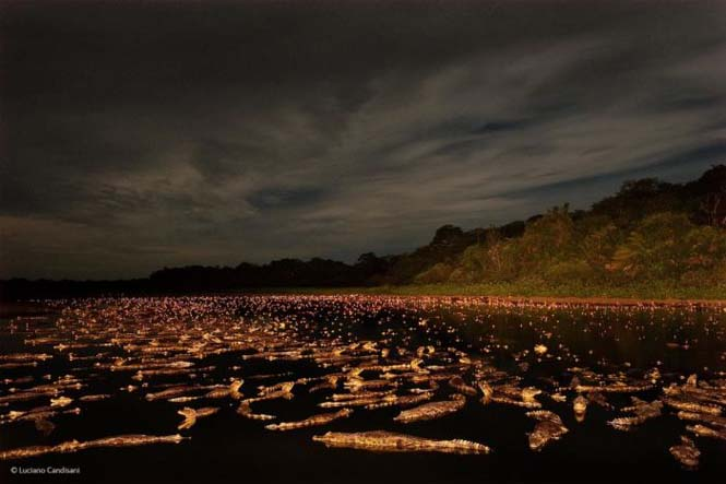 Wildlife Photographer Of The Year 2014 (27)