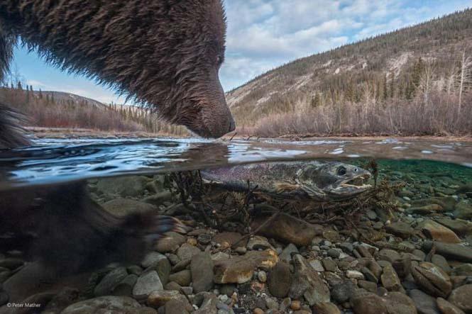 Wildlife Photographer Of The Year 2014 (28)