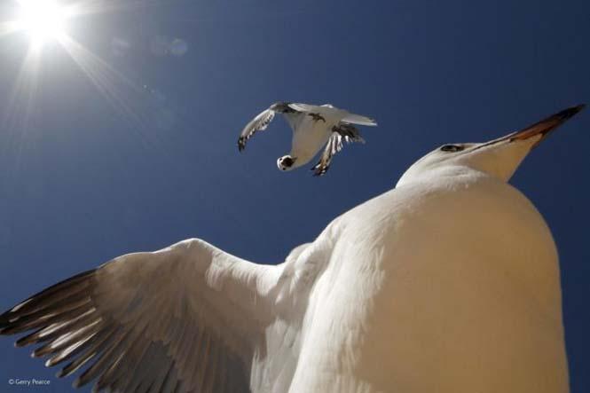 Wildlife Photographer Of The Year 2014 (30)