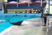 4χρονος παίζει με δελφίνι
