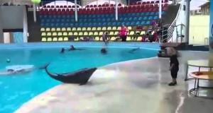 Αυτός ο 4χρονος μόλις βρήκε τον καλύτερο του φίλο… ένα δελφίνι (Video)