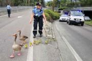 Αστυνομικοί που δίνουν το καλό παράδειγμα (10)