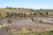 1,5 εκατομμύριο γκνου διασχίζουν ένα ποτάμι σε αυτό το εντυπωσιακό time-lapse video