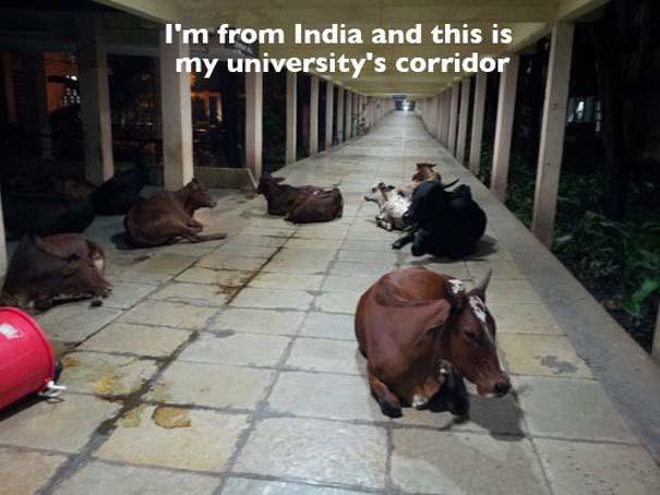 Εν τω μεταξύ, στην Ινδία... (10)