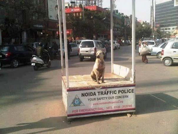Εν τω μεταξύ, στην Ινδία... (15)