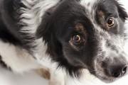 Ένοχοι σκύλοι που έχουν μετανιώσει