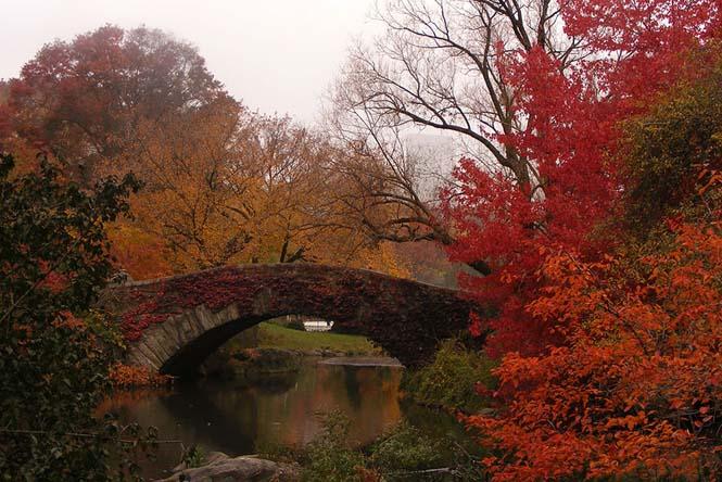 Φθινοπωρινές μεταμορφώσεις (4)