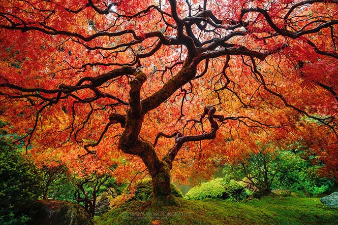 Φθινοπωρινές μεταμορφώσεις (6)