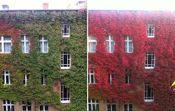 Φθινοπωρινές μεταμορφώσεις (7)