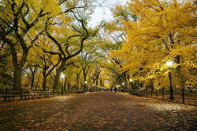 Φθινοπωρινές μεταμορφώσεις (11)