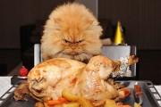 Garfi: Ο πιο θυμωμένος γάτος στον κόσμο (16)