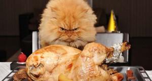 Garfi: Ο πιο θυμωμένος γάτος στον κόσμο
