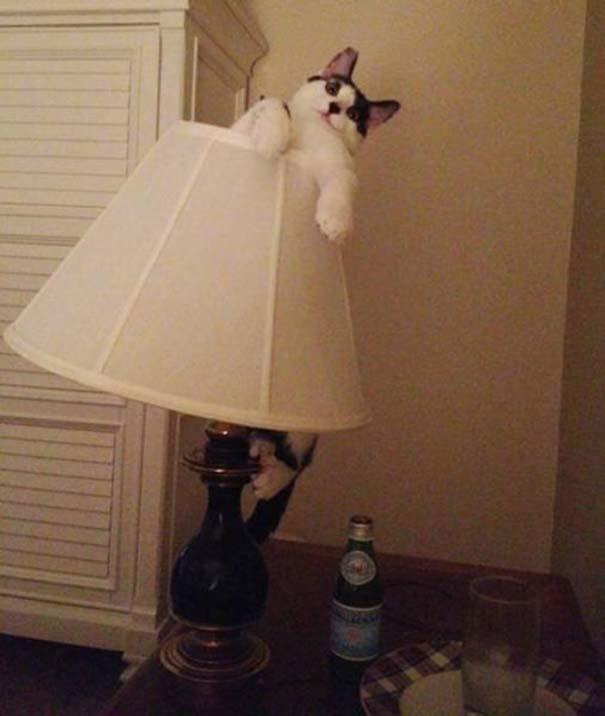 Γάτες που... κάνουν τα δικά τους! (5)
