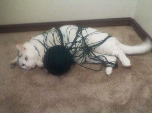 Γάτες που... κάνουν τα δικά τους! (16)