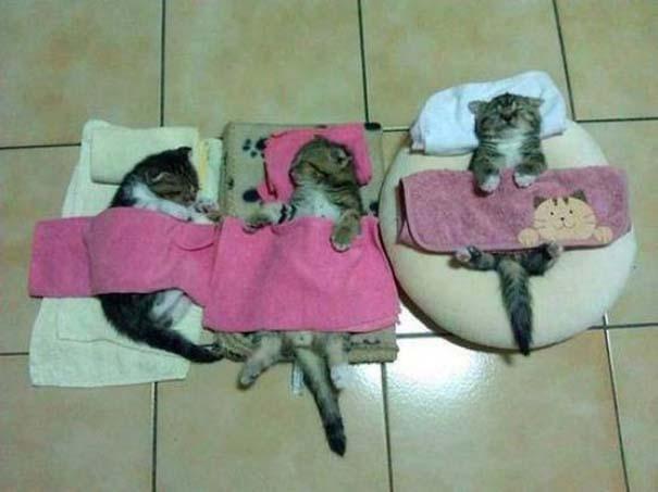 Γάτες που... κάνουν τα δικά τους! (12)