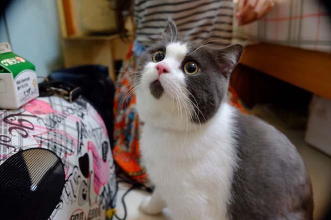 Η γάτα που μοιάζει μονίμως έκπληκτη (4)