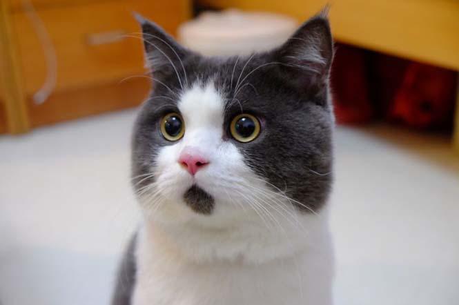 Η γάτα που μοιάζει μονίμως έκπληκτη (7)