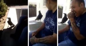 Και τότε το κοράκι τον πλησίασε και του είπε… (Video)