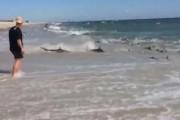 Καρχαρίες στη Βόρεια Καρολίνα