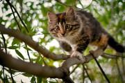 Η κωμικοτραγική διάσωση μιας γάτας πάνω σε δένδρο